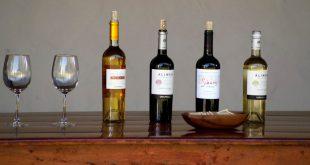 degustar vinos